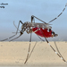 Mosquitoes and Midges - Photo (c) Marcello Consolo, some rights reserved (CC BY-NC-SA)