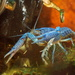 Everglades Crayfish - Photo (c) Steve Harwood, some rights reserved (CC BY-NC)