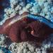 Pulpo Azul - Photo (c) Barry Lyons, todos los derechos reservados