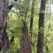 Manfern - Photo (c) Forest and Kim Starr, some rights reserved (CC BY)