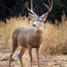 Deer - Photo (c) David W. Boston, all rights reserved