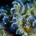 Sabellariidae - Photo (c) Jeff Stauffer, כל הזכויות שמורות