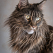 Domestic Cat - Photo (c) Ignacio Ferre Pérez, some rights reserved (CC BY-NC-ND)