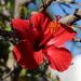 Tulipán Moteado - Photo (c) sylb, todos los derechos reservados