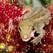 Mokohinau Gecko - Photo (c) Neil Fitzgerald, all rights reserved