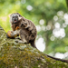 Silvery-brown Tamarin - Photo (c) Sebastian Ocampo, all rights reserved