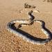 Bar-bellied Sea Snake - Photo (c) ppyykk, all rights reserved