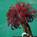 Eudistylia vancouveri - Photo (c) Wendy Feltham, todos los derechos reservados