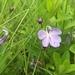 Butterfly Bush - Photo (c) Twané Clarke, all rights reserved