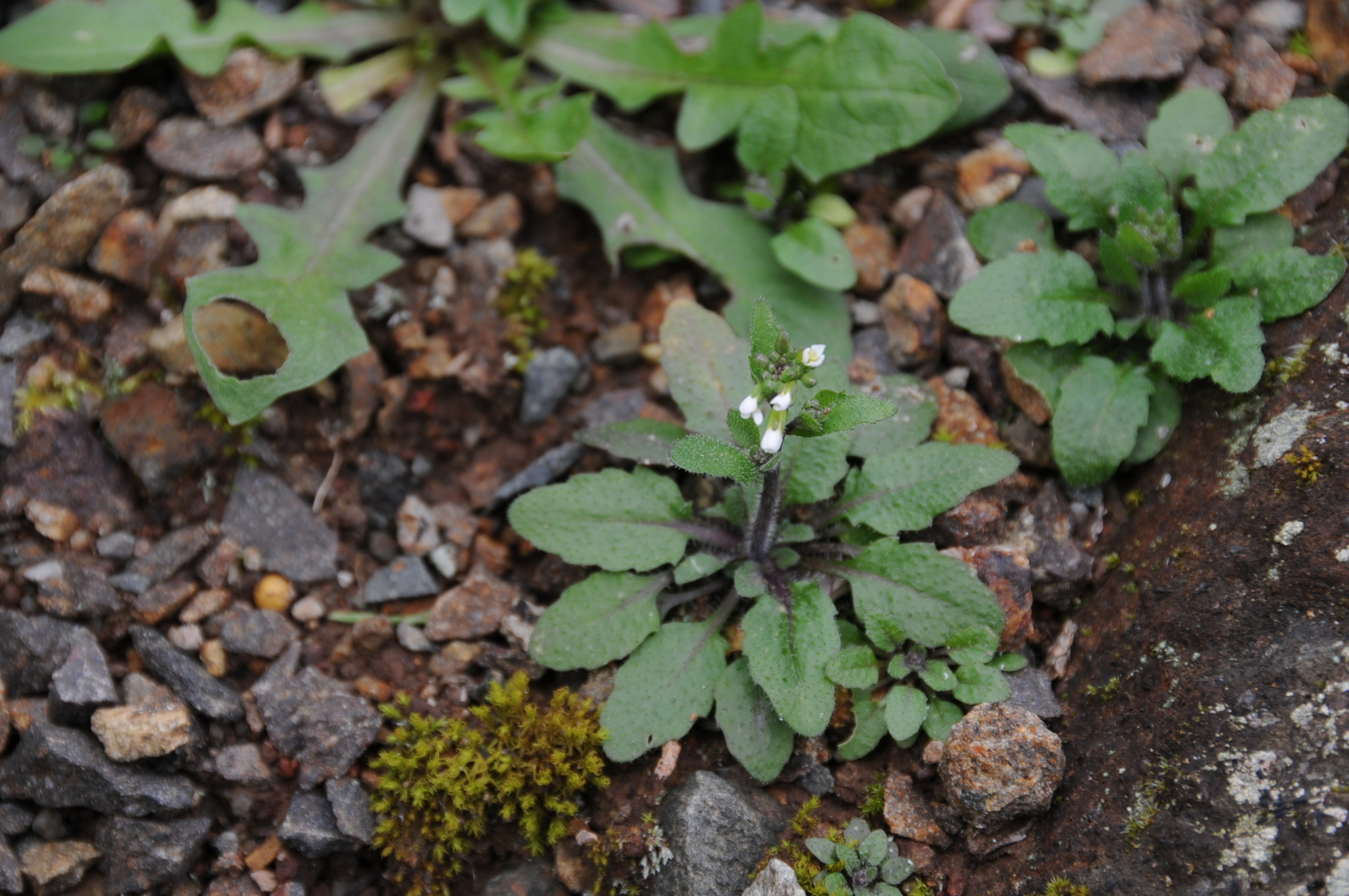 an overview of the experiment aspects of arabidopsis thaliana in mouse species