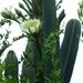 Aguacollas - Photo (c) Ian Pearson, todos los derechos reservados