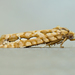 Diedra cockerellana - Photo (c) Michael King, όλα τα δικαιώματα διατηρούνται