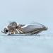 Diploschizia impigritella - Photo (c) mhking250, todos los derechos reservados