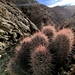 Harem Cactus - Photo (c) Andres Martinez, all rights reserved