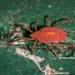Smarididae - Photo (c) Joseph C, todos os direitos reservados