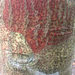 Pyrenula cruenta - Photo (c) Nicki Cagle, todos los derechos reservados