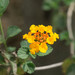 Lantana - Photo (c) Joseph C, all rights reserved