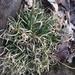 Danthonia spicata - Photo (c) ananya_sanyal2, todos los derechos reservados