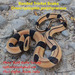 Oreocryptophis porphyraceus porphyraceus - Photo (c) rajib, όλα τα δικαιώματα διατηρούνται, uploaded by Rajib Rudra Tariang