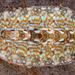 Cyanoplax berryana - Photo (c) Gary McDonald, todos los derechos reservados