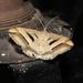 Chiasmia subcurvaria - Photo (c) Wolf-Achim Roland, all rights reserved