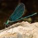 Caballito del Diablo Azul - Photo (c) Konstantinos Kalaentzis, todos los derechos reservados