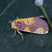Blotched Orange - Photo (c) Nigel Voaden, all rights reserved