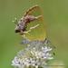 Chlorostrymon simaethis simaethis - Photo (c) Juan Carlos Garcia Morales, todos los derechos reservados