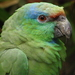 Festive Parrot - Photo (c) Snowmanradio, some rights reserved (CC BY)