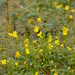 Bladderworts - Photo (c) Under the same moon..., some rights reserved (CC BY)