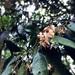 Styrax suberifolius - Photo (c) thememethedream, all rights reserved