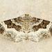 Epirrhoe alternata - Photo (c) Michael King, todos los derechos reservados