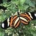 Almendra Tigre - Photo (c) Maristela Zamoner, todos los derechos reservados