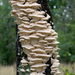 Marshmallow Polypore - Photo (c) Eric Hunt, all rights reserved