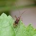 Phytocoris - Photo (c) WonGun Kim, todos los derechos reservados