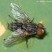 Grasshopper Maggots - Photo (c) Valter Jacinto, all rights reserved