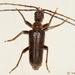 Long-horned Beetles and Allies - Photo (c) Valter Jacinto, all rights reserved
