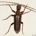 Cerambycoidea - Photo (c) Valter Jacinto, כל הזכויות שמורות
