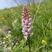 Short-spurred Fragrant-Orchid - Photo (c) Anita, all rights reserved