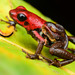 Amphibians - Photo (c) Andrés Mauricio Forero Cano, some rights reserved (CC BY-NC)