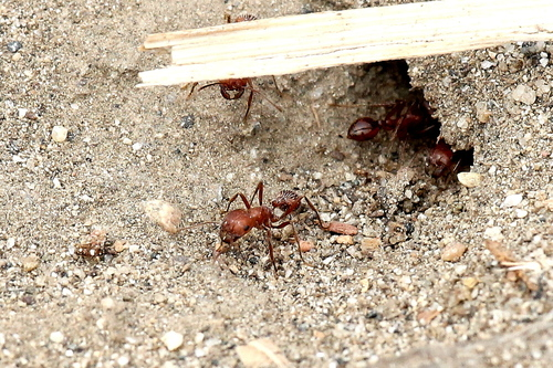 ant observation Students will make observations of ants being placed in a commercial habitat.