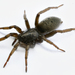 Arañas de Tierra - Photo (c) 尤光平, todos los derechos reservados