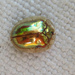 Golden Tortoise Beetle - Photo (c) nbnc, all rights reserved, uploaded by North Branch Nature Center