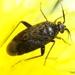Lepidargyrus ancorifer - Photo (c) Valter Jacinto, όλα τα δικαιώματα διατηρούνται