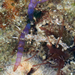 Cratena simba - Photo (c) Terry Gosliner, todos los derechos reservados