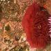 Epiactis lisbethae - Photo (c) Wendy Feltham, כל הזכויות שמורות