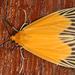 Dioptinae - Photo (c) gernotkunz, todos los derechos reservados