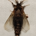 Evergreen Bagworm Moth - Photo (c) lkirk, some rights reserved (CC BY-NC)