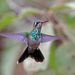 Esmeralda Oriental - Photo (c) Nigel Voaden, todos los derechos reservados