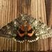 Catocala unijuga - Photo (c) farleysullivan, todos los derechos reservados